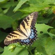 mariposa-inspiración